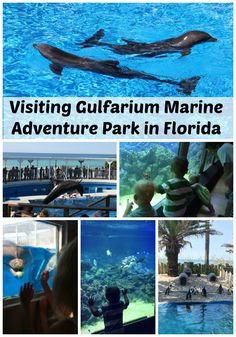 We visited the Gulfarium Marine Adventure Park in Fort Walton Beach on our southern road trip this summer and had a blast. #Florida #FamilyTravel #travel