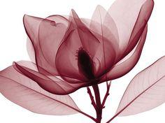 Steven N. Meyers. Este artista nos brinda una forma elegante y diferente de mirar las complejas y hermosas estructuras de flores y hojas. Una visión en rayos X de la vida secreta de la naturaleza, que se despliega en una intensa belleza oculta a simple vista...