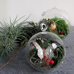 Fill terrariums with berries, holly and pine for holiday - Easy, Beautiful Ornament Making |Moomah the Magazine