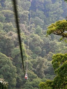 Zip Lining in the jungle of Costa Rica | This may be the longest zipline to ride. Love It!