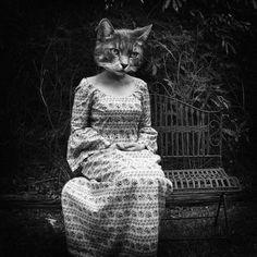 Google Image Result for http://www.deviantart.com/download/142468838/Crazy_Cat_Lady_3__by_tasha_jade.png