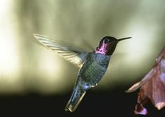 List Of Flower Bulbs To Plant For Hummingbirds