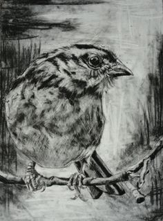 Alexander Landerman | Bird | Charcoal and graphite on paper