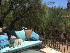 Outdoor Sofa, Outdoor Furniture, Outdoor Decor, Paradise Valley Arizona, Home Decor, Decoration Home, Room Decor, Home Interior Design, Backyard Furniture