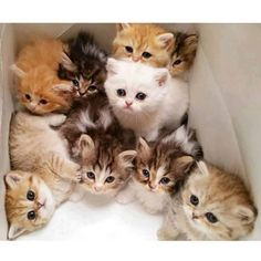 Try to keep the kittens with their mama until they are eating solid food. The milk of their mother contains antibodies that will help the kittens to grow up strong and healthy and her love and care will teach them what they need to know to be grown up cats.