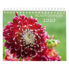 Shop Beauty of Dahlias 2020 Calendar created by JennyRainbow. Holiday Gifts, Christmas Gifts, Event Template, Wire Binding, Bloom Blossom, Calendar 2020, Buy Art Online, Colorful Garden, Dahlias