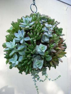 Succulent Orb, Kissing Ball --> and she actually sells cuttings of succulents for a reasonable price Hanging Succulents, Succulent Arrangements, Cacti And Succulents, Succulent Bonsai, Succulent Wreath, Succulent Ideas, Diy Plante, Fleurs Diy, Love Garden