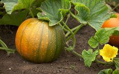 harvesting and stori