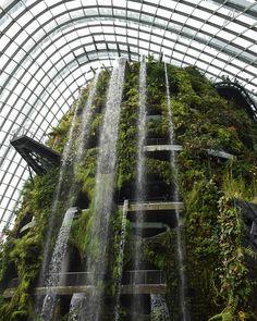 Nature is calling. #gbtb #cloudforest  #nikonsg  #vsco #vscocam #vscosg #exploringsingapore #gf_singapore #instasg #sg50 #singapore #nikon #nikontop #nikon_photography_ #nikonphoto_ #mynikonlife #ig_divineshots #ishootraw #backpack_singapore #exploresg @exploresingapore @backpack_singapore @gf_singapore by max_digitalphotography