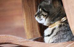 Mietzenbild samt Halsband von happyCat*