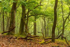 Regenschauer im Eichenwald, Landschaft, aufgenommen im Mai
