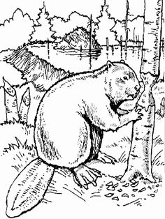 Beaver Coloring Page - hamsters Farm Animal Coloring Pages, Tree Coloring Page, Colouring Pages, Printable Coloring Pages, Coloring Pages For Kids, Coloring Books, Free Coloring, Wild Creatures, Woodland Creatures