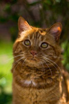 artsinmyheart: My neighbours cat is so adorable