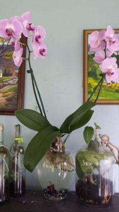 33 Ideas De Orquídeas En Agua Orquídeas En Agua Orquideas Plantas De Orquideas