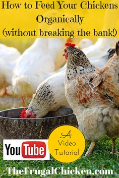 Want to give organic chicken feed to your flock, but can't afford the high prices?