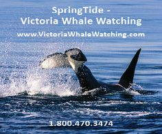 Tourism Victoria | Whale Watching Ferry Ride