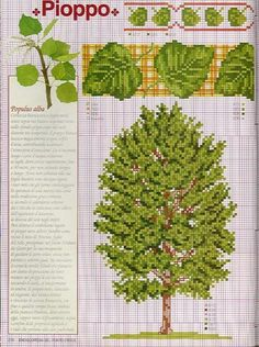 Gallery.ru / Фото #7 - Ботаника деревья - irislena