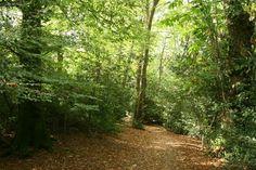 Thorncombe Wood, England