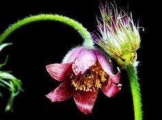 Filmes, Curtas, Documentários: Nature Is Speaking - A Flor