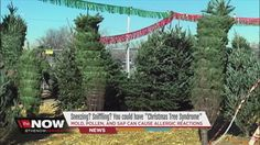 Mold, pollen, and sap from Christmas trees could cause allergic reaction...