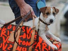 Hardi et gentil - Site Officiel du Jack Russell Terrier