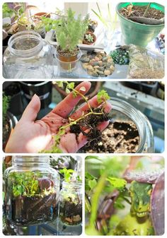 Make a Terrarium - a great gift idea or project for Earth Day