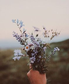 que lindo amor de flores silvestres - Wild Flowers, Beautiful Flowers, Bouquet Flowers, Bouquets, Purple Flowers, Flower Aesthetic, Aesthetic Drawing, No Rain, Flower Wallpaper