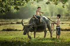 Thai boys riding buffalo. by Jakkree Thampitakkul on 500px