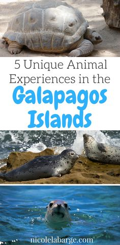 Galapagos is an amaz