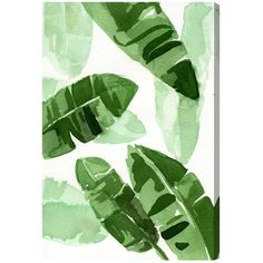 Tropical Wonders Canvas Print, Oliver Gal | Joss & Main