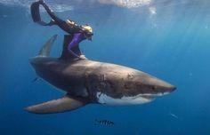 Nadar Entre os Tubarões Mais Temidos do Planeta — Para os Salvar