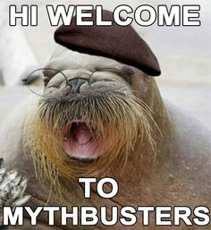 Hi welcome to Mythbusters