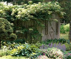 Climbing hydrangea, part to full shade and a sturdy support to climb on. This vine is great at scaling walls and other structures because roots grow from the stems and cling to a surface. Be sure to give climbing hydrangea moist, well-drained soil that has a high organic matter content.