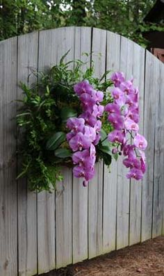 Orchid Planter Using the Living Wall Planting System