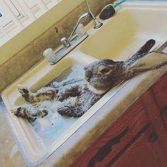 My friend's rabbit enjoying a bath.