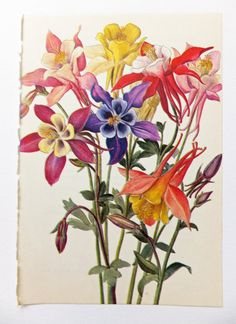Your place to buy and sell all things handmade Columbine Tattoo, Columbine Flower, Botanical Drawings, Botanical Illustration, Botanical Prints, Colorado Wildflowers, Wildflower Tattoo, Flora Flowers, Flower Sleeve