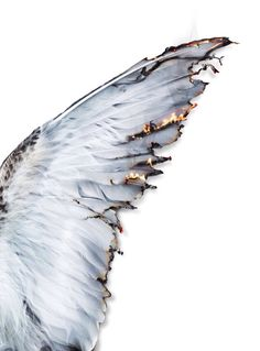 "She looked upon the burning wings. Her knees buckled underneath her, sending her softly into the snow. How the flames flickered and fluttered off the tips of the feathers. ""He's gone,"" she whispered; her pale pink fingertips smoothing out the wrinkles and smothering the flames."
