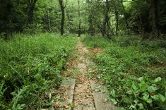Hiking Trail in Akana Wetlands Forest in Shimane Prefecture, #Japan #stockphoto #travel #adventure #trail