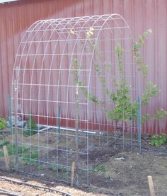 grapevine trellis designs | simple arched trellis for grape vine using ranch panel