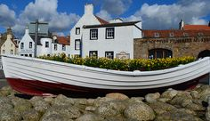 Tour Scotland Photograph Daffodils Harbour Anstruther East Neuk Of Fife March 18th