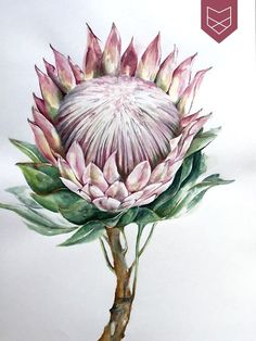 Protea Art, Protea Flower, Flower Bird, Watercolor Leaves, Watercolor Art, Peony Illustration, Winsor And Newton Watercolor, Australian Native Flowers, Watercolor Pictures