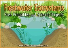 FREE Freshwater Ecosystems Printables and Projects More