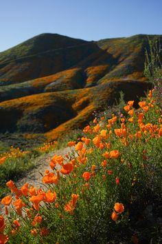 California Superbloom by Kirsten Alana - Kirsten Alana Photography - Exposure - California Superbloom by Kirsten Alana – Kirsten Alana Photography – Exposure - Orange Aesthetic, Nature Aesthetic, Flower Aesthetic, Exposure Photography, Landscape Photography, Nature Photography, Photography Tips, Scenic Photography, Portrait Photography