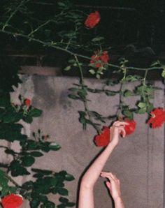 roses #florals #flowers #garden