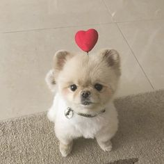 Get Your Dog Trained Today With These Simple Tips Fluffy Animals, Cute Baby Animals, Animals And Pets, Cute Puppies, Dogs And Puppies, Pet Dogs, Dog Cat, Doggies, Tattoo L