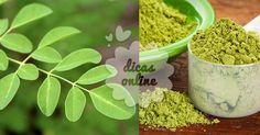 Incrível! Benefícios desconhecidos da moringa - # #beneficios #Moringa…