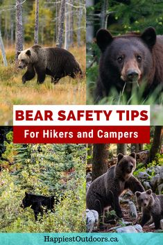 Stay safe in bear country. Use these tips for hikers, campers and backpackers if you are around bears. Learn how to avoid bears, how to keep bears away from your campsite, how to use bear spray, and what to do if you see a bear. Camping in bear country doesn't have to be scary. Be prepared with these bear safety tips. Learn what to do if you see a black bear, a brown bear, or a grizzly bear #bearsafety #hiking #camping Go Hiking, Hiking Tips, Rv Travel, Adventure Travel, Travel Tips, Black Bear, Brown Bear, Camping Spots, Rv Camping