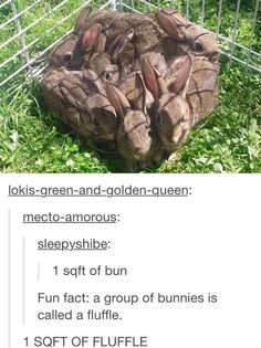 1 sqft of bunny fluffle Cute Funny Animals, Funny Cute, Humorous Animals, Tumblr Funny, Funny Memes, Haha, Animal Memes, Animal Humor, Animals And Pets