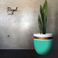 ROYAL OCEAN POT