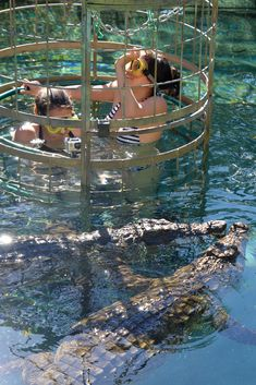 Crocodile cage diving in South Africa - Don't know if I'd do that but it's interesting Oh The Places You'll Go, Great Places, Places To Visit, African Holidays, South Africa, Travel Inspiration, Road Trip, Scenery, Crocodile